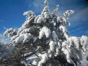snowco